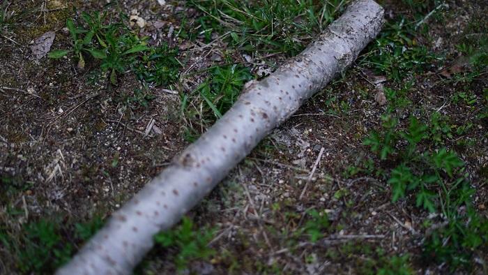 バトニング広葉樹